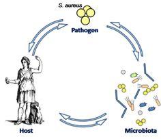 Interfakultäres Institut für Mikrobiologie und Infektionsmedizin-Infektionsbiologie  研究チームの発表によると、この抗生物質として有望な化合物は、鼻の中に生息する細菌によって生成され、病気を引き起こすスーパーバグ(抗生物質が効かない細菌)を殺傷する能力を持つという。