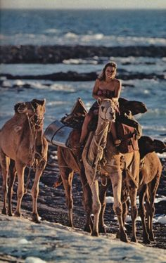 Riding camels on a rocky beach is on my bucket list, for sure