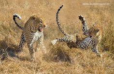 Afterplay by Marsel van Oosten on 500px