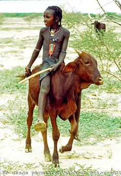 Niger. Sahel. Young Wodaabe (Bororo/Fulani) nomad herding cattle. His father reprimanded him for riding a calf.
