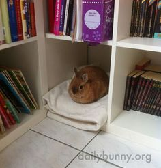 Bunny has his own spot reserved on the book shelf:)