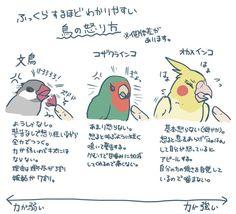 そこらのヤンキーよりもキレる文鳥さん。みんなかわいい。 Animals And Pets, Cute Animals, Parakeet Bird, Bird Party, Cockatiel, Trivia, Knowledge, Japanese, Humor