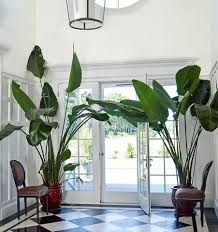 mooie planten  Image result for plantation style interiors