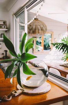 Health   Well-Being Feng Shui | water   plant decor idea