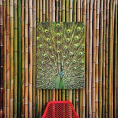 Zorg voor een mooie tuin decoratie met de tuinposters van Made on Friday. Peacock, Home Appliances, Shabby Chic, House Appliances, Kitchen Appliances, Peacock Bird, Appliances, Peacocks, Peafowl