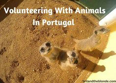 Read about our experience volunteering with animals in Portugal at britandtheblonde.com