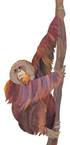 Orang utan paper collage by Jonathan Woodward Art And Illustration, Illustrations Posters, Zoo Project, Animal Projects, Art For Art Sake, Animal Fashion, Fantasy Creatures, Animal Drawings, Cute Art