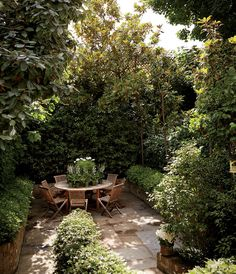 Lush magnolias, camellias, and ivy make for a garden oasis in the city.