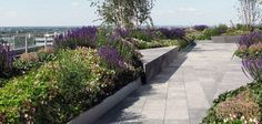 Townshend Landscape Architects - Projects - Ropemaker