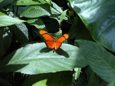 Bioparque La Reserva, Cota, Colombia