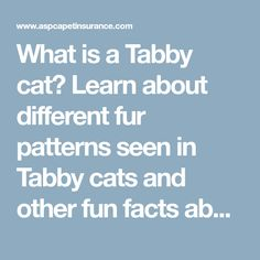 What is a Tabby cat? Learn about different fur patterns seen in Tabby cats and other fun facts about this feline friend.