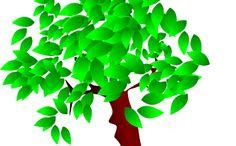 Remedio casero para el dolor de garganta con árbol de té - Trucos de salud caseros