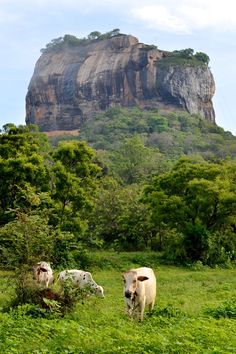 Every country has an icon. Sigiriya is Sri Lanka's