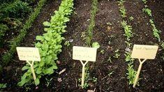 Gemüsebeet sinnvoll anlegen: Wenn man die richtigen Gemüsesorten nebeneinander pflanzt, fällt die Ernte reicher aus. Tipps für die Mischkultur.