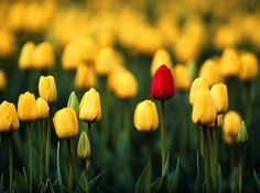 I stand alone | Interesting Pictures