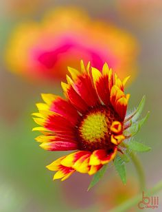~~gaillardia by cbiiidesigns~~ Free Pinterest E-Book Be a Master Pinner http://pinterestperfection.gr8.com/