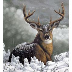 Bugs Bunny Drawing, Deer Drawing, Girl Drawing Sketches, Animal Sketches, Wildlife Paintings, Wildlife Art, Animal Paintings, Deer Photos, Deer Pictures