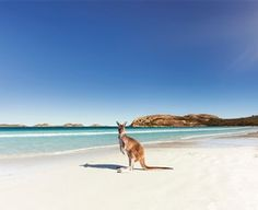 The Great South West Edge Bunbury To Esperance With Images Trip Wine Region Australia