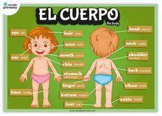Infografía de las partes del cuerpo humano, en castellano y su nombre correspondiente en inglés.#infography #children #education #resources #flowcharts #school #spanish
