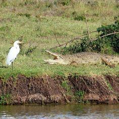 Nairobi, Bird, Animals, Animales, Animaux, Birds, Animal, Animais