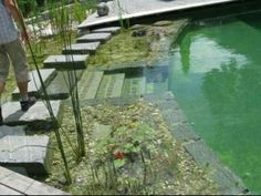BioNova® Natural Swimming Pools BioNova® Natural Swimming Pools are built to operate using the same principles and functions that Mother Nature uses to clarify and purify natural ponds, stre…