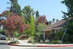 Sherman Oaks landscaping project