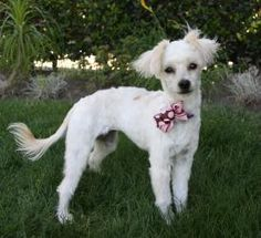 Newport Beach Petco Pet Adoption