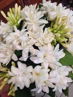 Wedding Flowers, Plants, Plant, Planets, Bridal Flowers