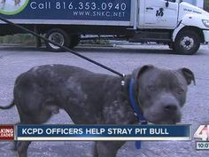KCPD Officers Help Stray Pit Bull