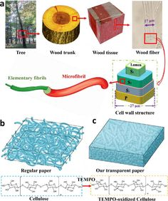 (Phys.org) —A new kind of paper that is made of wood fibers yet is 96% transparent could be a revolutionary material for next-generation sol...