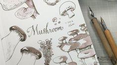 Vidéo dessin de champignons à la plume