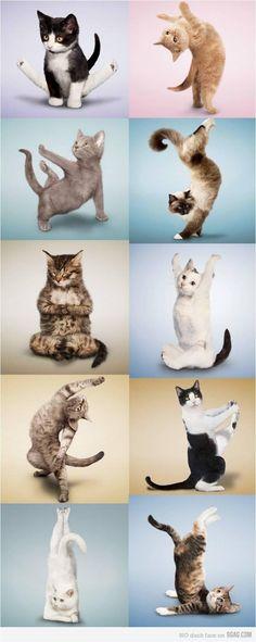 La gymnastique du chat !!
