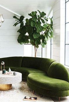 moss green sofa. living room.