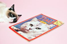 Grumpy Cat Is Not Impressed by TIME's Photo Shoot