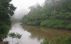 Ayahuasca Healing Retreat in the Amazon Rainforest, near Iquitos, Peru