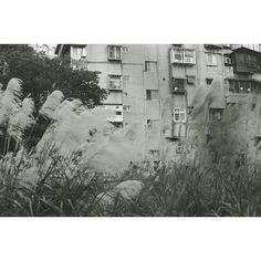 chienlo's photo on Instagram