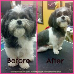 Groom by Cady, an awesome Groomer at Barks 5th Avenue, Houston, Texas.