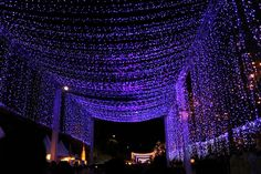 Wow! Universal Studios in #Singapore just debuted the 'world's largest indoor light bulb display'. Take a look: http://travelwireasia.com/2016/11/universal-studios-singapore-debuts-worlds-largest-indoor-light-bulb-display/