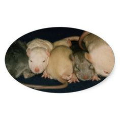 heads and tails baby rats stickers