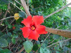 brightest flower