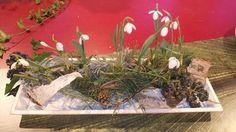 Längliche Tischdekoration mit Schneeglöckchen