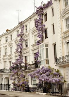 wisteria on a stone facade with ironwork