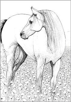 Zeehond Kleurplaten Volwassenen Paard In Hart Paardenknutsels Pinterest Medium