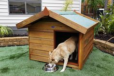 Made from non-arsenic based treated pine and Australian jarrah, Matt's Homes wooden dog kennels are designed with a removable Colorbond® roof for easy access and cleaning. Generously sized with off-set entrance, large roof overhang & a raised moisture resistant floor. Matt's Homes timber dog kennels come flat-packed for easy pick-up and DIY install yourself, or buy fully assembled. Our large dog kennel will suit up to 2 big dogs - Rotweiler, German Shepherd.