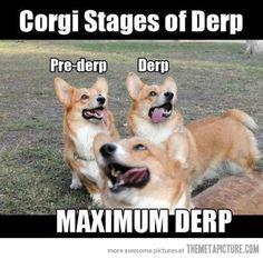 corgi states of derp this ones for Abby