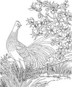 Free Printable Coloring PageDelaware State Bird And Flower Blue Hen Chicken Peach Blossom Educational Printables