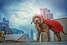 Melbourne Pet Photographer ~ Lyra's Project ~ Week 22