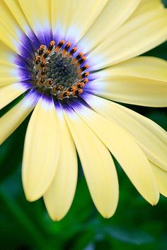 #Flowers | #flower