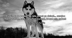Let Me Down, Let It Be, Rap, Husky, Quotes, Emoji, Quotations, Qoutes, Husky Dog