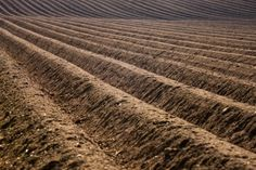 THE N2 DILEMMA: IS AMERICA FERTILIZING DISASTER?  New research: synthetic nitrogen destroys soil carbon, undermines soil health | Grist